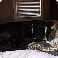 Adopt A Pet :: Lulu - Bedminster, NJ