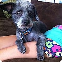 Adopt A Pet :: Mogul - Santa Monica, CA
