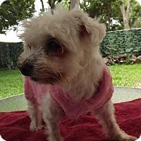 Adopt A Pet :: Angela (FL) - Gainesville, FL