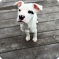 Adopt A Pet :: Coraline - Charlotte, NC