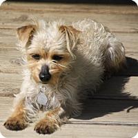Adopt A Pet :: Roxy - Edmonton, AB