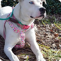Adopt A Pet :: Luna - Dallas, GA