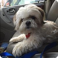 Adopt A Pet :: Oscar - Raleigh, NC