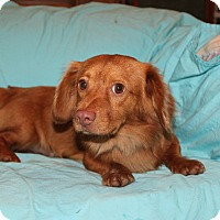 Adopt A Pet :: Copper (has been adopted) - Buffalo, NY