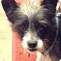 Adopt A Pet :: Prince - Boulder, CO