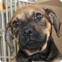 Adopt A Pet :: Gumbo - Harmony, Glocester, RI