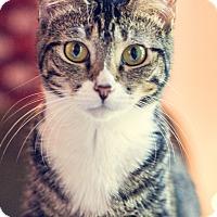 Adopt A Pet :: Thalia - Gainesville, FL