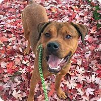 Adopt A Pet :: Donny - Troy, MI