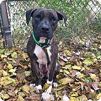 Adopt A Pet :: Sugar Plum - Cleveland, OH