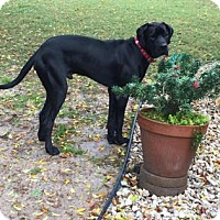 Adopt A Pet :: Huey - Santa Fe, TX