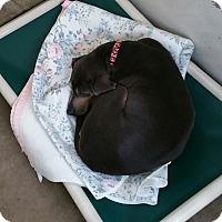 Adopt A Pet :: Jade - Chippewa Falls, WI