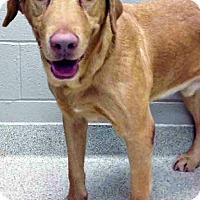 Adopt A Pet :: Reggie - Shorewood, IL