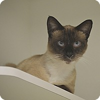 Adopt A Pet :: Templeton - San Leon, TX