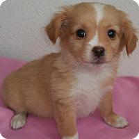 Adopt A Pet :: Foxy - Stockton, CA