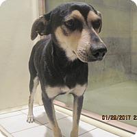 Adopt A Pet :: DICKSON - La Mesa, CA