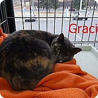 Adopt A Pet :: Gracie - Chilhowie, VA