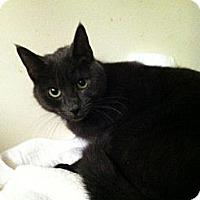 Adopt A Pet :: Blue - Fredericksburg, VA