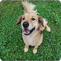 Adopt A Pet :: Joey - Foster, RI