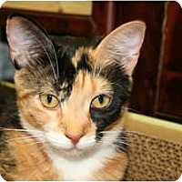 Adopt A Pet :: DeeDee - Bonita Springs, FL