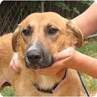 Adopt A Pet :: Chula - Kingwood, TX