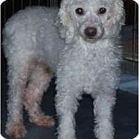 Adopt A Pet :: Martha - Wellington, OH