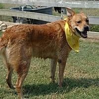 Adopt A Pet :: Neo - McKinney, TX