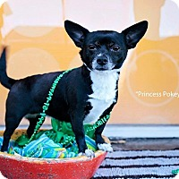 Adopt A Pet :: Princess Pokey - Shawnee Mission, KS
