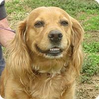 Adopt A Pet :: Sasha - Salem, NH