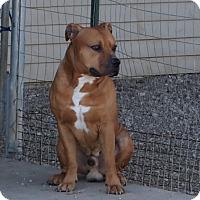 Adopt A Pet :: Olaf - Prole, IA