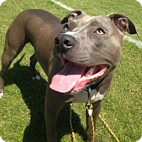 Adopt A Pet :: Trevor- Courtesy Listing - Fredericksburg, VA