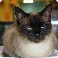 Adopt A Pet :: Geisha - Whittier, CA
