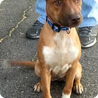 Adopt A Pet :: Red - Phoenix, AZ
