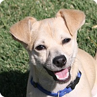 Adopt A Pet :: Milton - Edmonton, AB