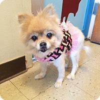 Adopt A Pet :: Buttercup - San Francisco, CA