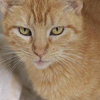 Adopt A Pet :: Trixie - Hammond, LA