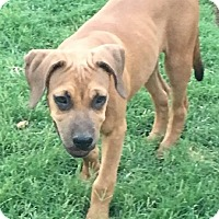Adopt A Pet :: Elsa - Thousand Oaks, CA