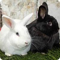 Adopt A Pet :: Bonnie & Clyde (Bonded Pair) - Encinitas, CA