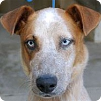 Adopt A Pet :: Max - Mountain Home, AR