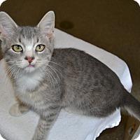 Adopt A Pet :: Dewy - Michigan City, IN