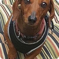 Adopt A Pet :: Cece - Decatur, GA