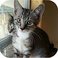 Adopt A Pet :: Zulu - Evans, WV