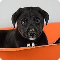 Adopt A Pet :: Vern - Columbia, IL