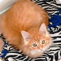 Adopt A Pet :: Fairbanks - Cloquet, MN