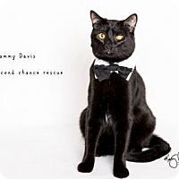 Adopt A Pet :: SAMMY DAVIS - UPLAND - Yucca Valley, CA