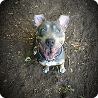 Terrier (Unknown Type, Medium) Mix Dog for adoption in Brookhaven, New York - Mason