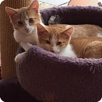 Adopt A Pet :: Hickory, Elm and Oak - Fairfax, VA