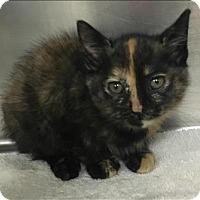 Adopt A Pet :: Casey - Napa, CA
