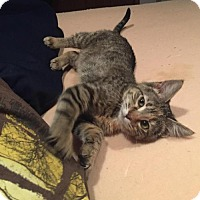 Adopt A Pet :: Mazy C1618 - Shakopee, MN
