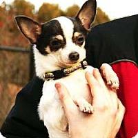 Adopt A Pet :: Julio - Sudbury, MA