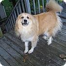 Adopt A Pet :: Harley